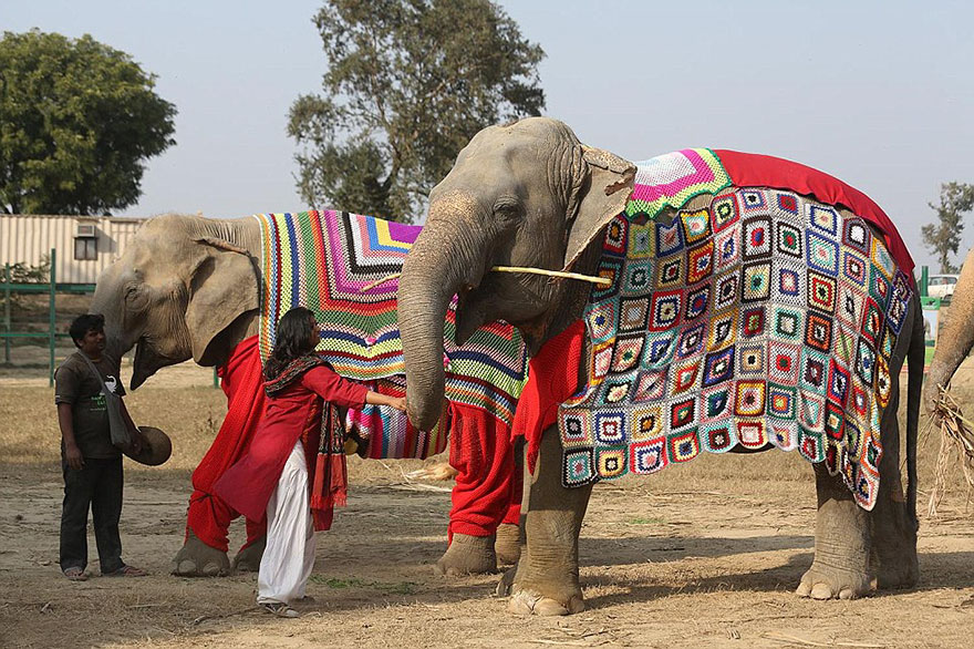 Rescued elephants get giant knitted sweaters