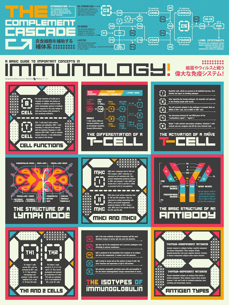 Beautiful infographic crib notes for immunology concepts