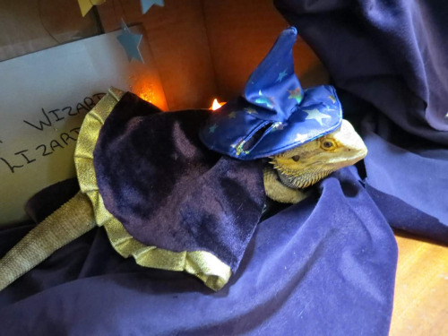 Wizard Lizard inspires more wizard lizards