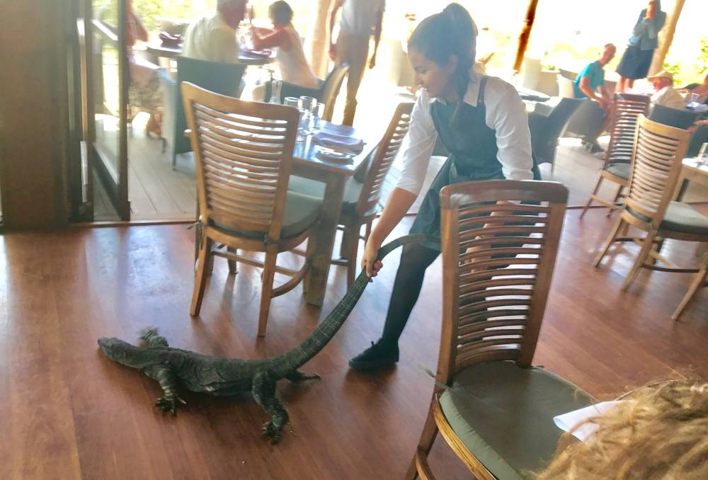 Restaurant server drags giant lizard out by the tail / Boing