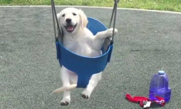 Holy Dog Pet Boarding