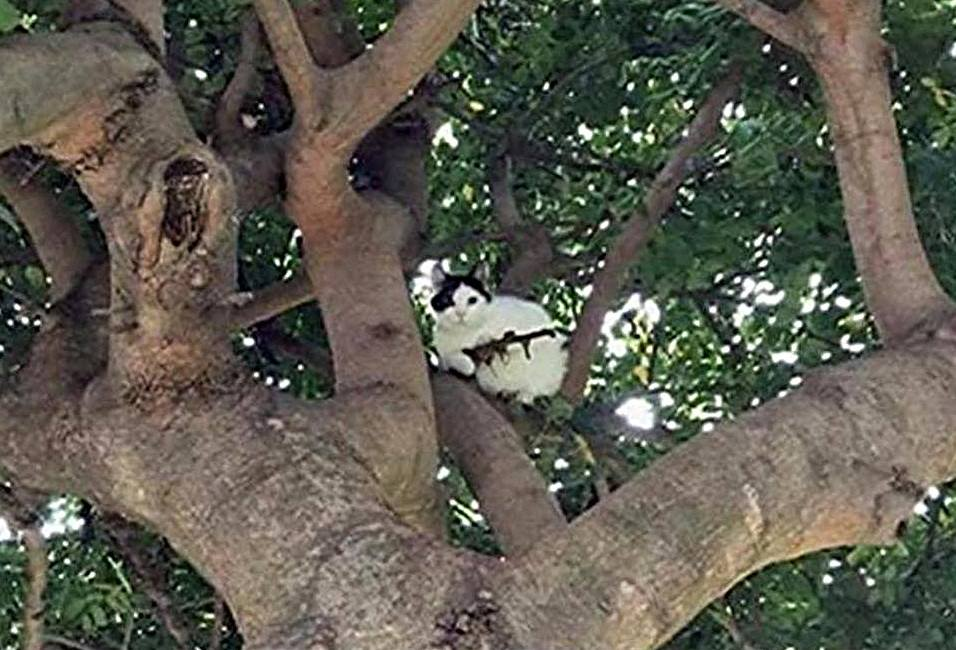 "Oregon cops issue ""verbal warning"" to armed cat in a tree"
