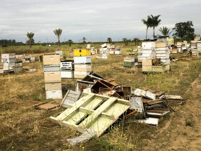 "Fresno cops find $1m worth of stolen bees in ""beehive chop shop"""