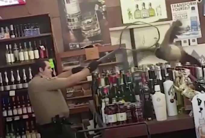 Peacock raises havoc in liquor store