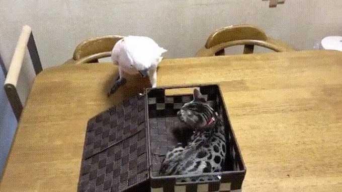 Bird regrets opening a box