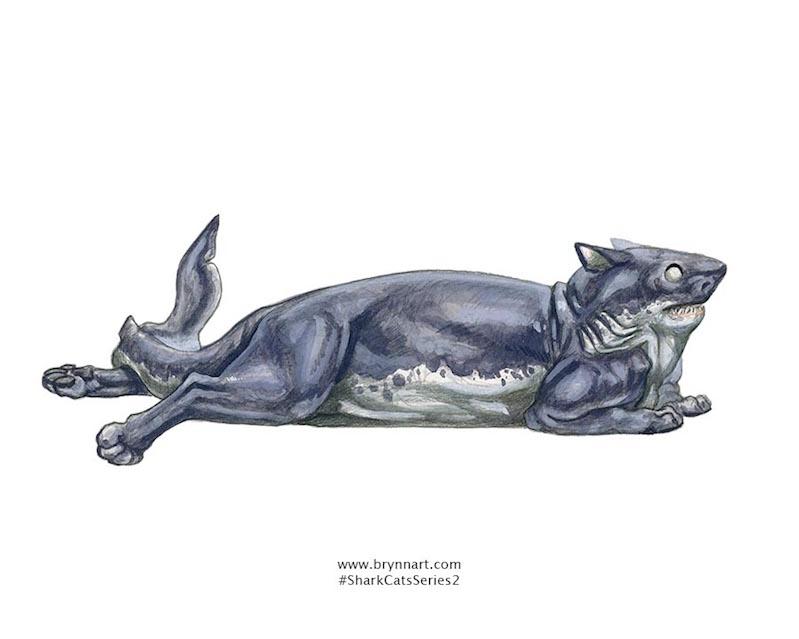 Shark cats: delightful portraits of terror