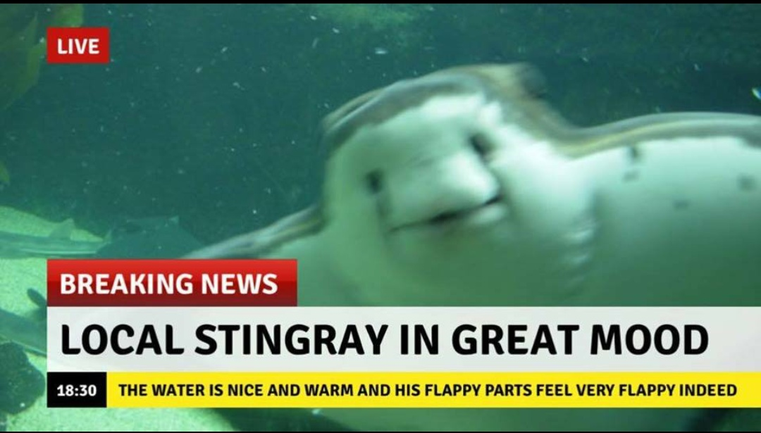 Local stingray is in a great mood boing boing for Is today a good day to fish