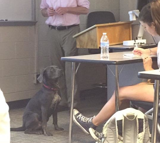 Student begs professor to let her bring dog to class before hurricane. What happens next is in fact awesome