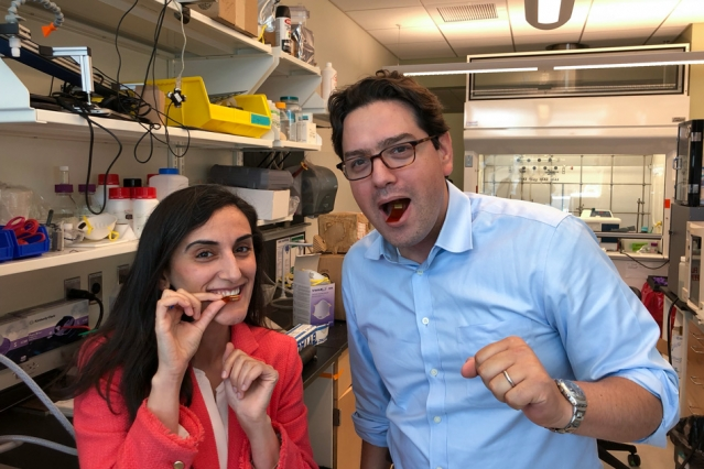 """New sensor pill like a """"Fitbit"""" you can swallow to monitor your stomach"""