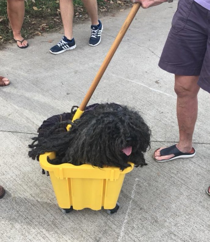 Dog that looks like a mop gets the perfect Halloween costume ...