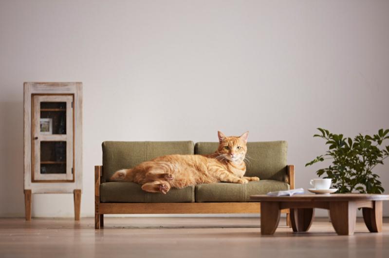 Delightful cat-sized furniture