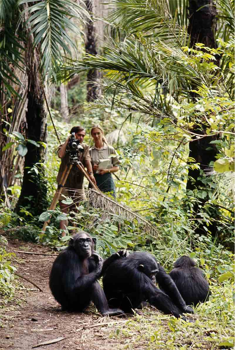 jane goodall research report Jane goodall research paper jane- full papers jane shares decades of research on animal behavior, conservation, and activismwe will write a custom essay sample on jane goodall research paper or any similar topic specifically for you.