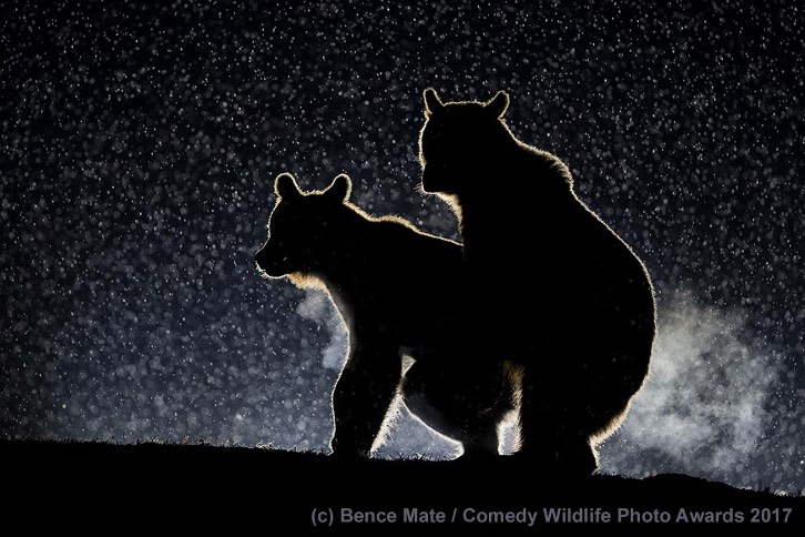 Absolutely wonderful finalists of the 2017 Comedy Wildlife Photography Awards