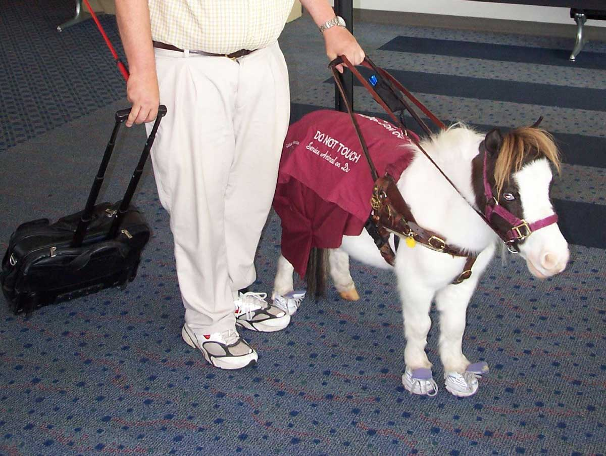 It won't be as easy as it used to be to bring comfort animals on a Delta flight
