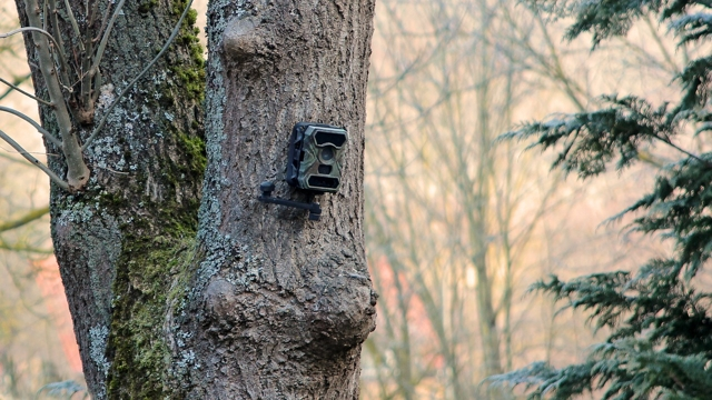 Rock Camera Surveillance : Rancher takes feds to court over camera they placed on his property