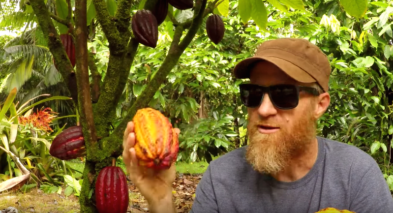 Watch this guy make chocolate bars from scratch with cacao beans he grew