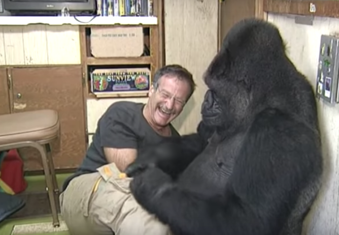 R.I.P. Koko, the amazing gorilla who used sign language to communicate with humans
