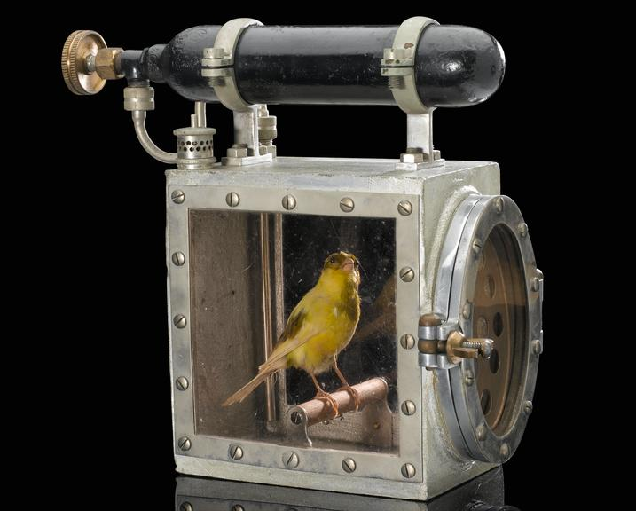 Sentimental coal-miners carried canary resuscitators to revive ...