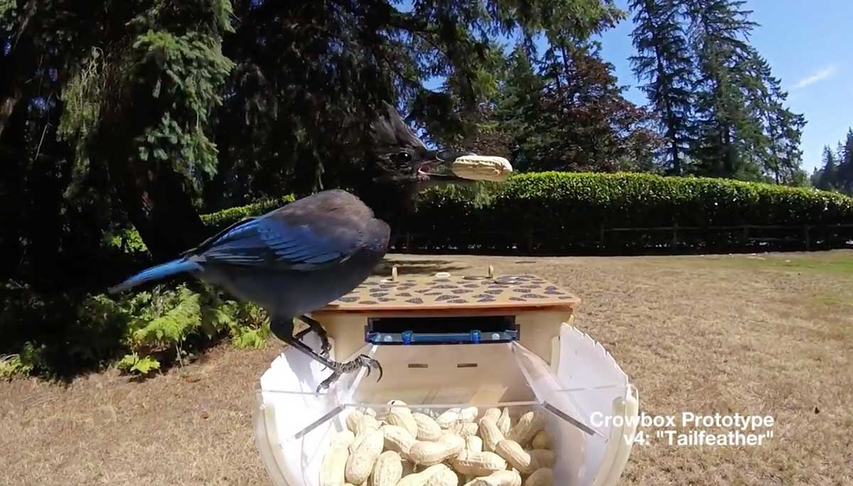 Build a Crowbox kit and become friends with your neighborhood crows