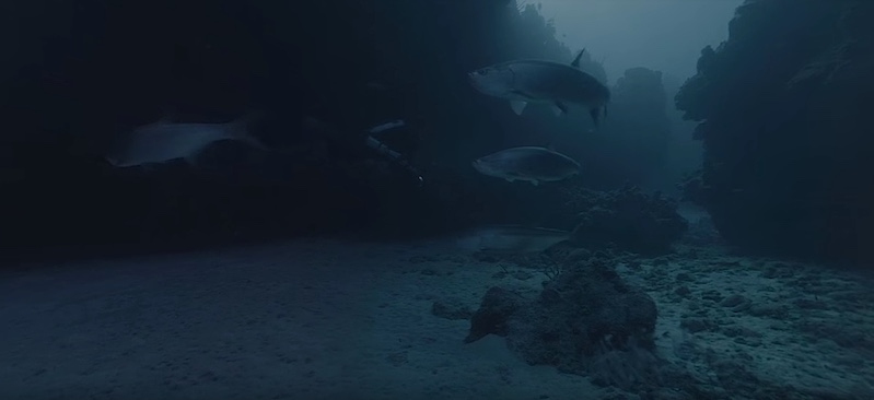 Watch Test Footage From A New Low Light 4K VR Underwater Camera Boing