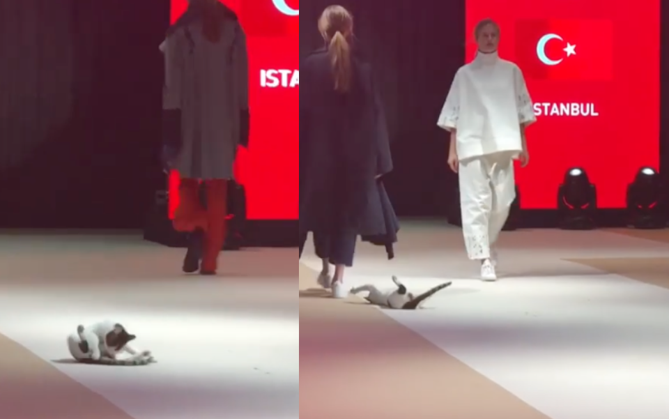 b08c81c14a A cat stole the show at the recent Esmod International Fashion Show in  Istanbul