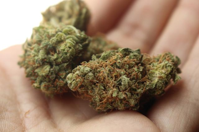 cannabis / Boing Boing