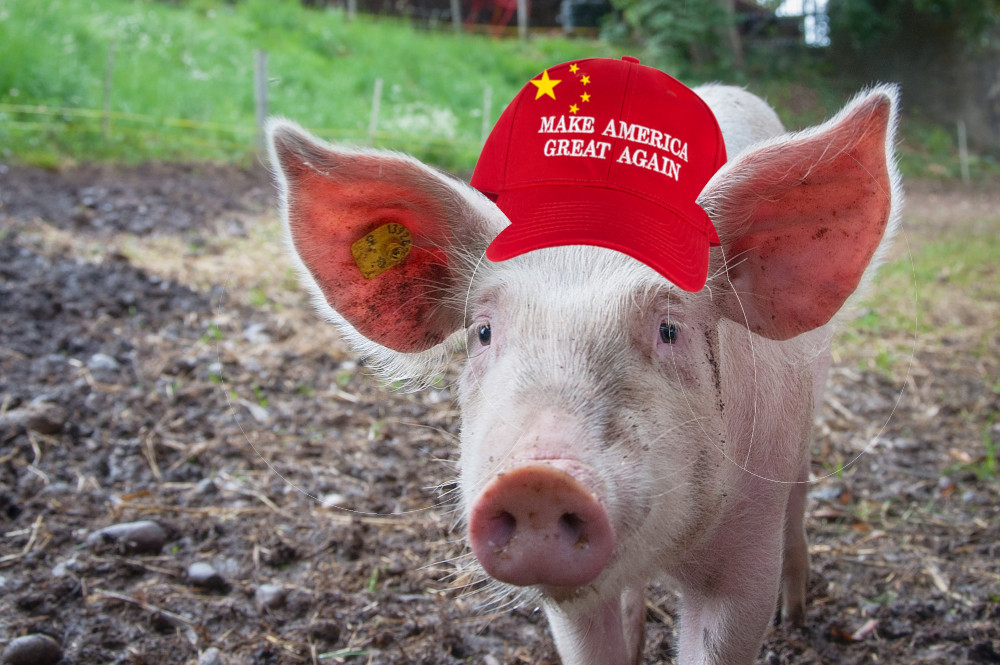 Trump is bailing out a Chinese owned pork producer to compensate it for retaliatory Chinese tariffs