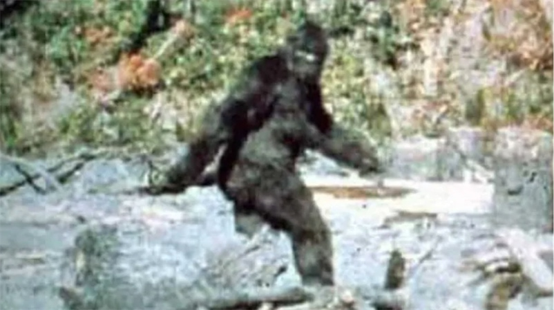Man shoots at Bigfoot, only it isn't Bigfoot