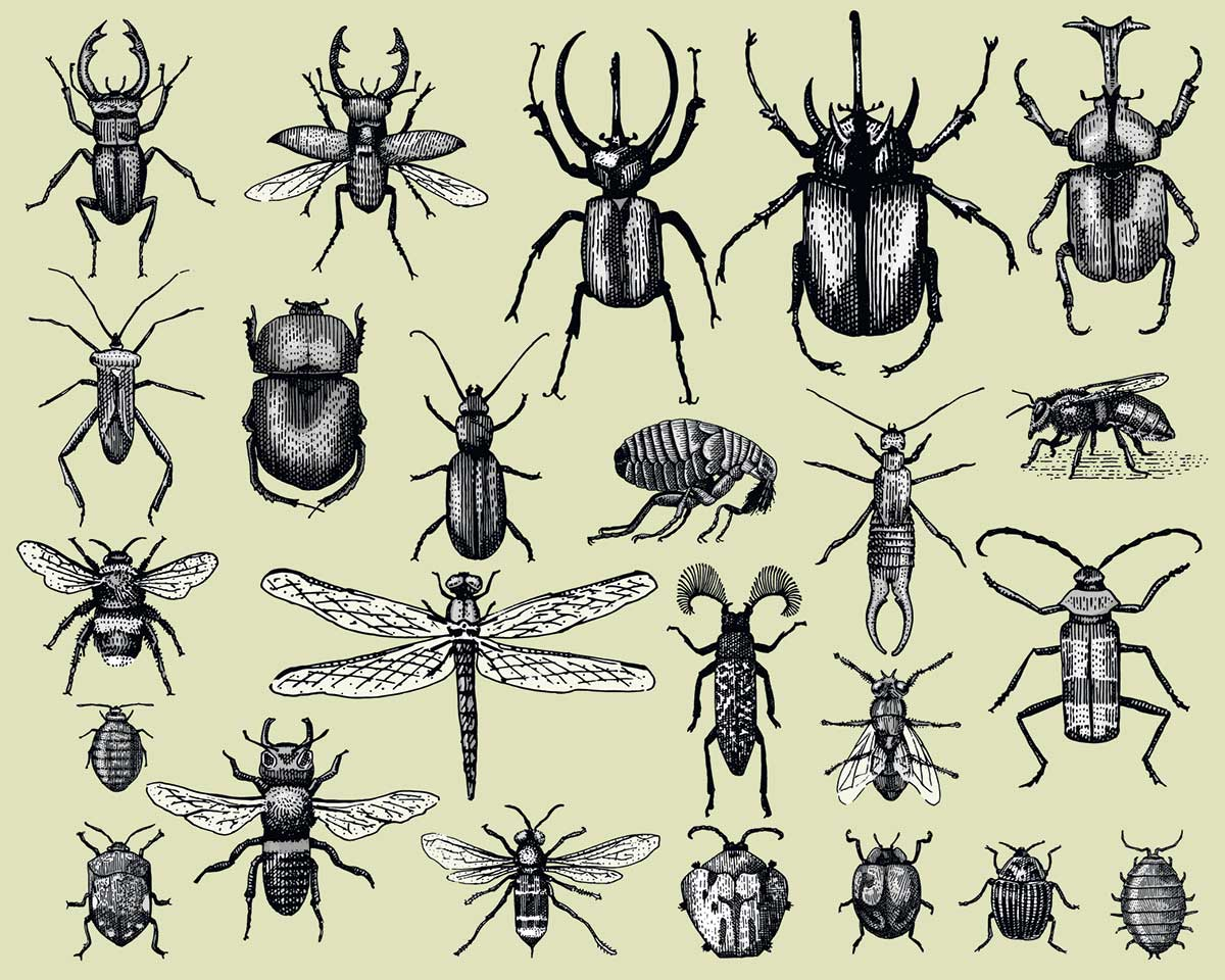 Insects are going extinct eight times faster than other animals