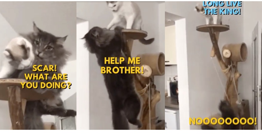 Live,action remake of The Lion King with just regular cats