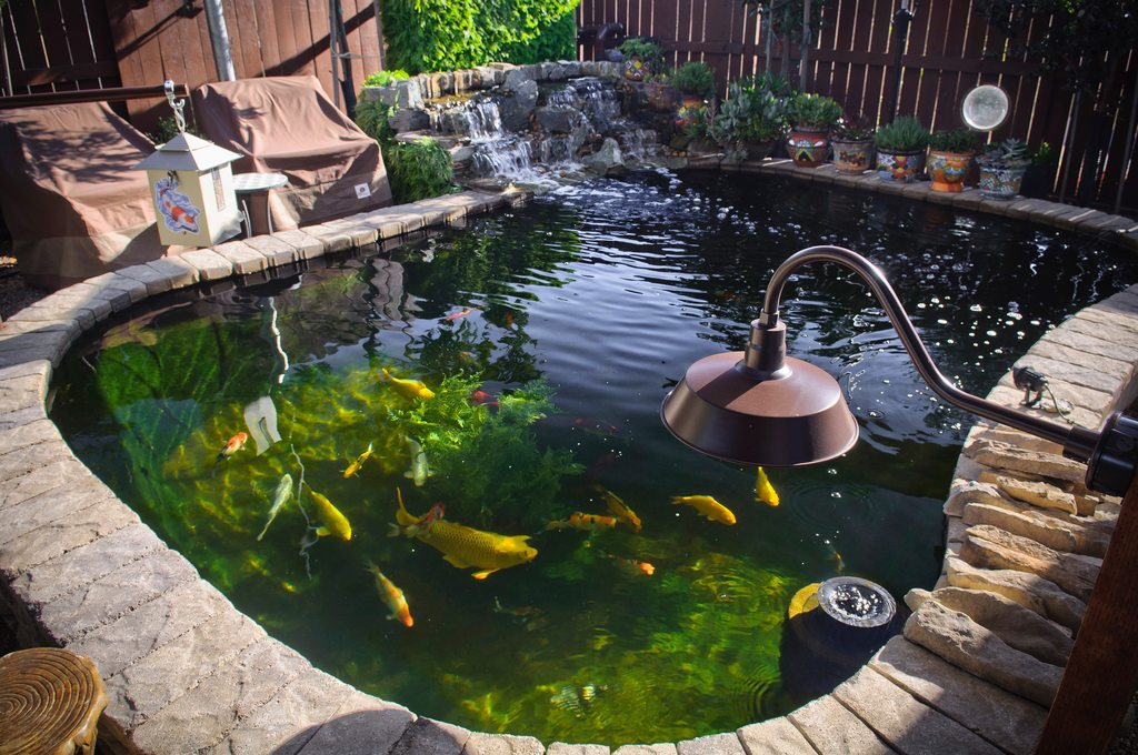 gallon Koi Pond,' DIY fishpond project