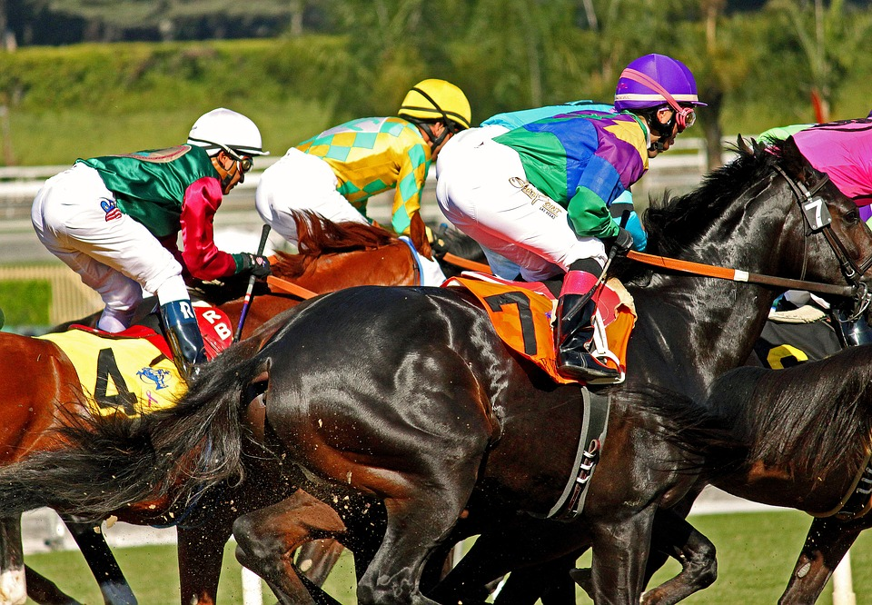 Another Horse Dies At Santa Anita 2 Year Old Colt Is 27th