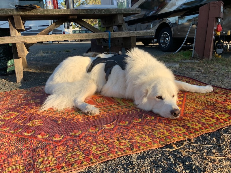 QnA VBage Recycled polypropylene rug helps my dog look GOOD