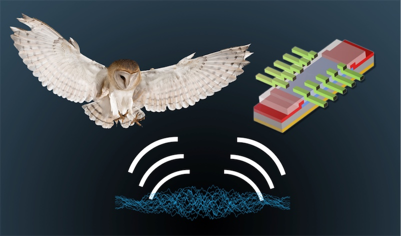 Barn owls' hearing inspires new electronic devices for wayfinding