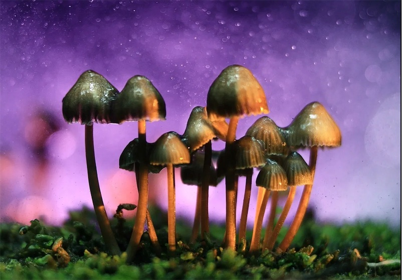 Johns Hopkins Medicine launches major center for psychedelic